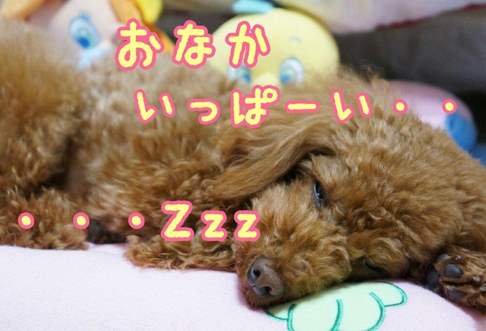 Link-DSC09388_deco.jpg