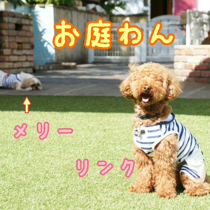oniwawan-Link-DSC00319_deco.jpg