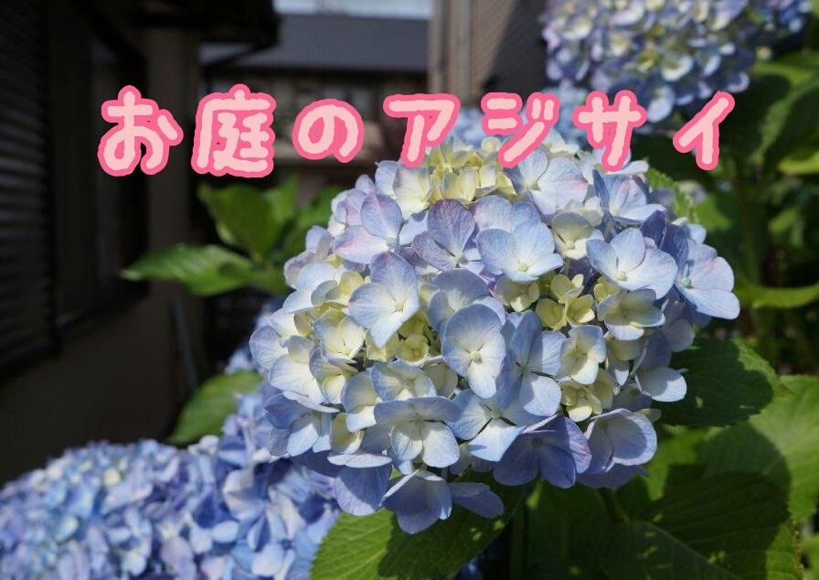 plant-DSC00384_deco.jpg