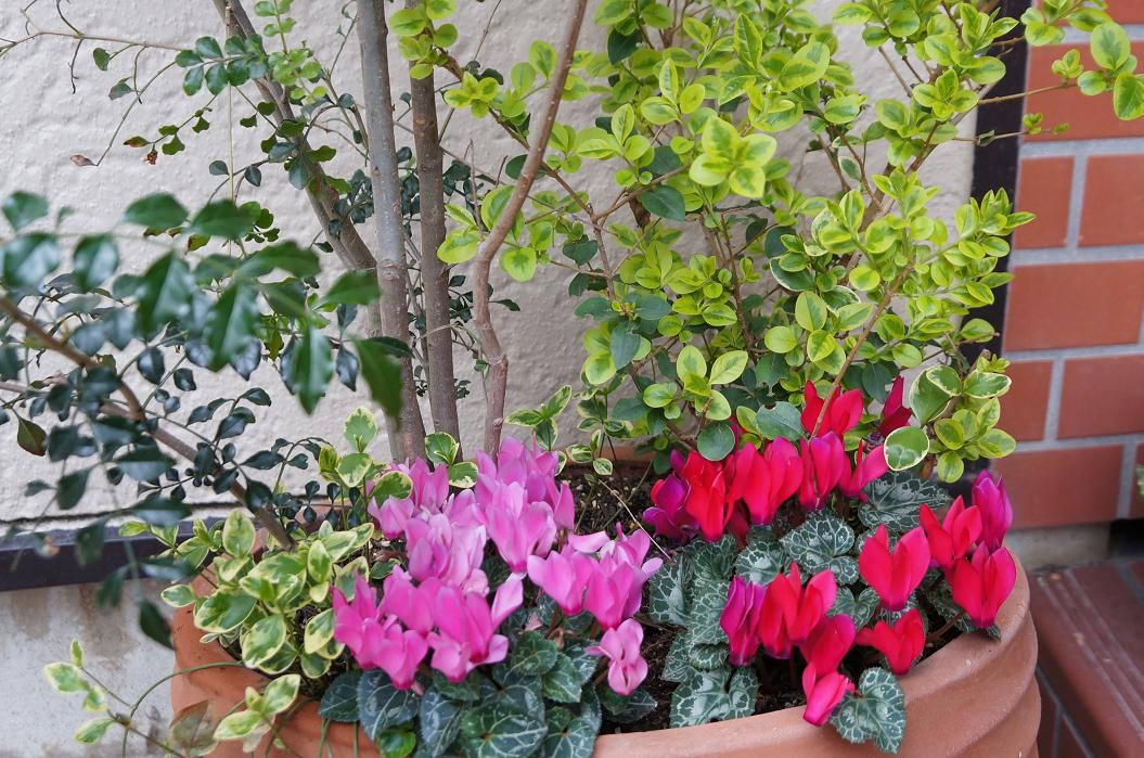 plant-DSC09784s.jpg