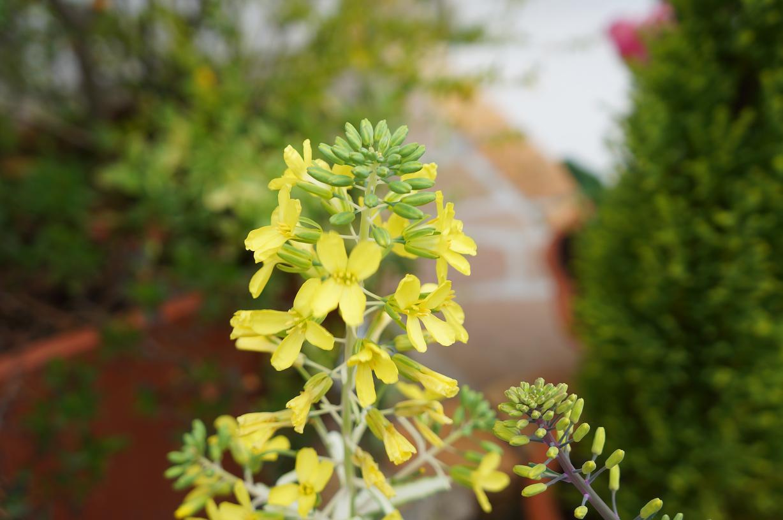 plant-DSC09849s.jpg