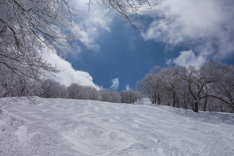 nozawa_0321-20.jpg