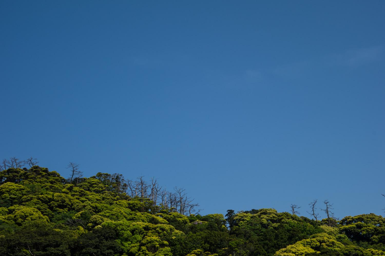 shimoda_2014_0505-24.jpg
