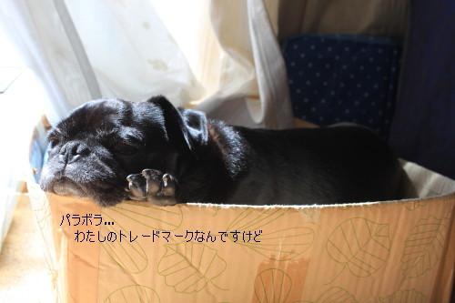 IMG_20140410__01.jpg