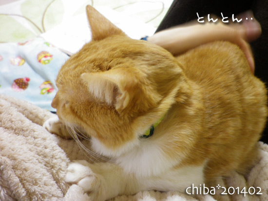 chiba14-02-102.jpg