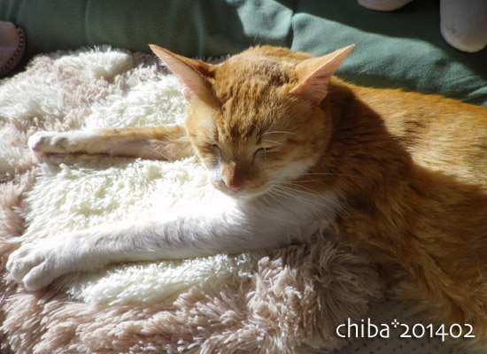 chiba14-02-108.jpg