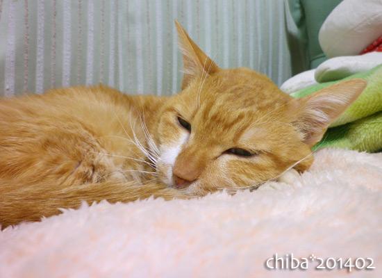 chiba14-02-125.jpg