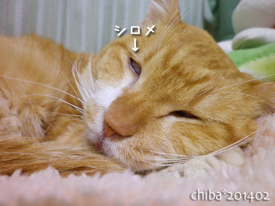 chiba14-02-128.jpg