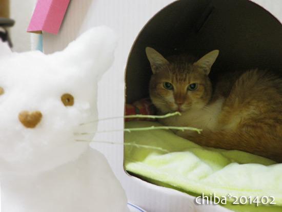 chiba14-02-37.jpg