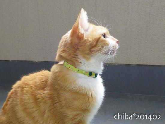 chiba14-02-65.jpg
