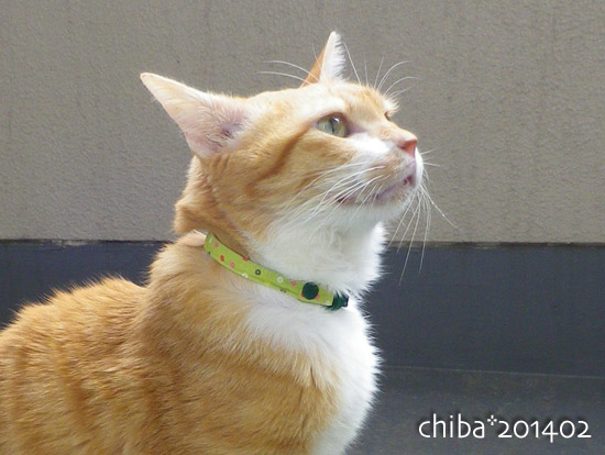 chiba14-02-68.jpg