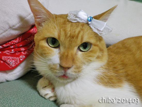 chiba14-03-134.jpg