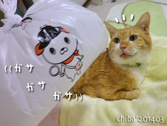 chiba14-03-14.jpg
