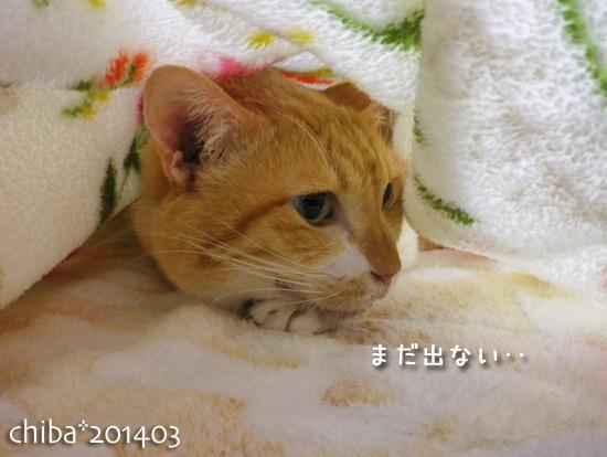 chiba14-03-167.jpg