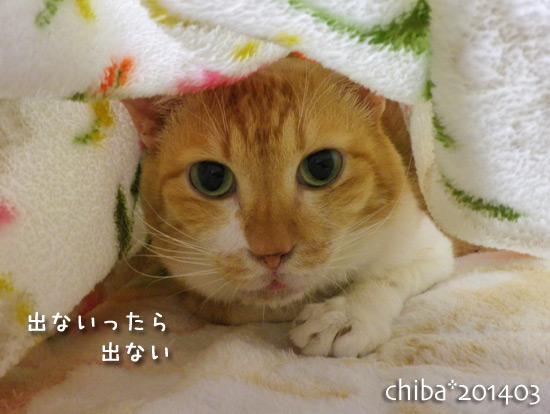 chiba14-03-169.jpg