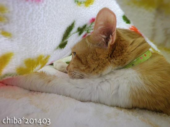 chiba14-03-172.jpg