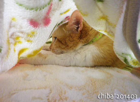 chiba14-03-173.jpg