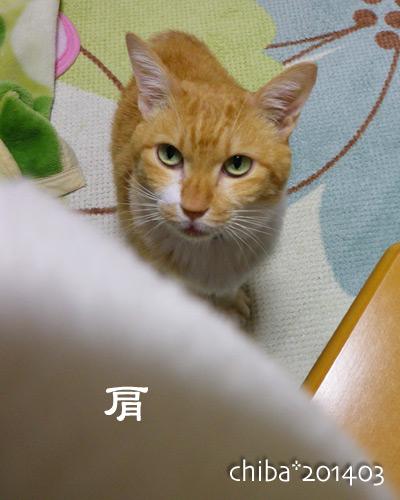 chiba14-03-187.jpg