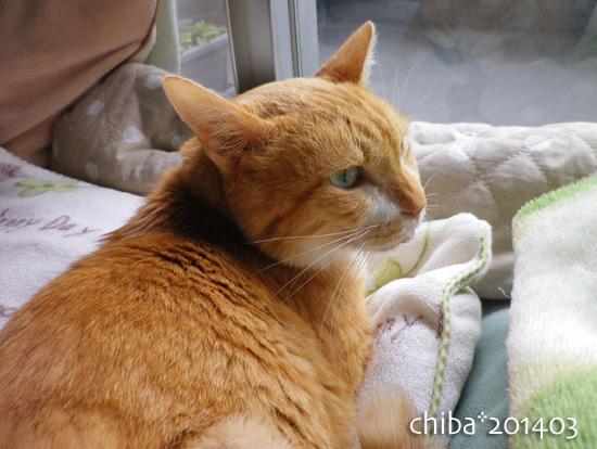 chiba14-03-201.jpg