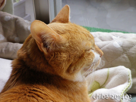chiba14-03-203.jpg