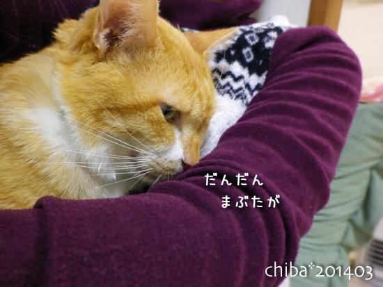 chiba14-03-213.jpg