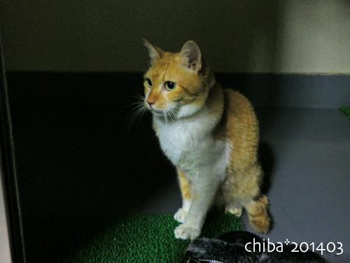 chiba14-03-227.jpg