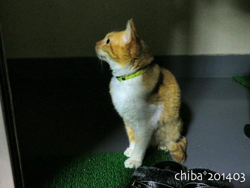 chiba14-03-229.jpg