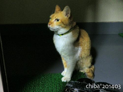 chiba14-03-231.jpg