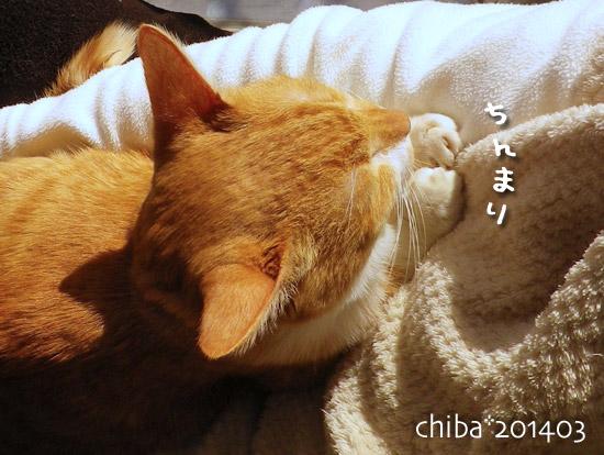 chiba14-03-32.jpg