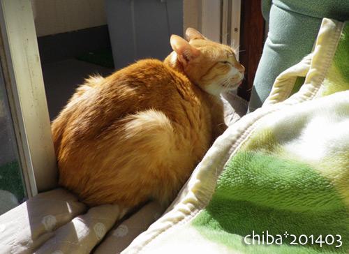 chiba14-03-38.jpg