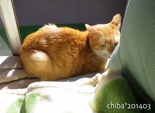 chiba14-03-39.jpg