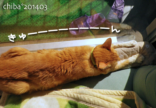 chiba14-03-42.jpg