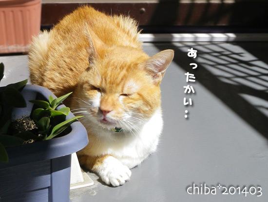chiba14-03-52.jpg