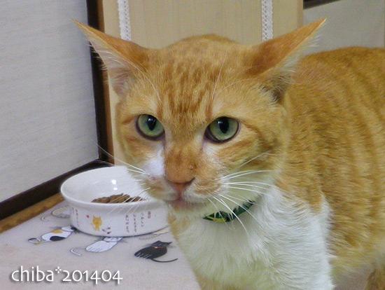 chiba14-04-22.jpg