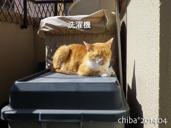 chiba14-04-73.jpg
