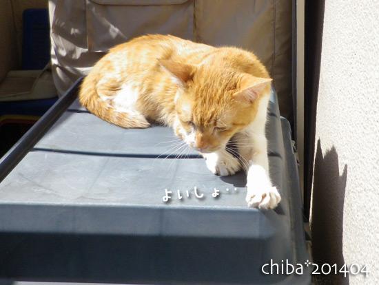 chiba14-04-76.jpg