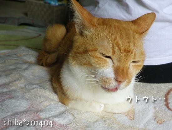 chiba14-04-96.jpg