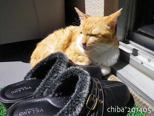 chiba14-05-110.jpg
