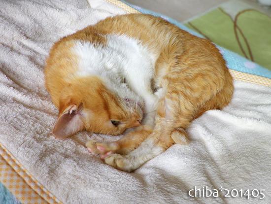 chiba14-05-113.jpg