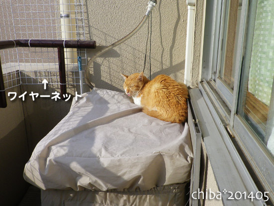 chiba14-05-144.jpg