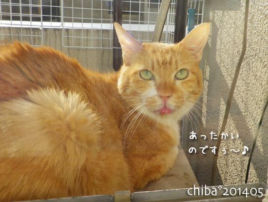 chiba14-05-146.jpg