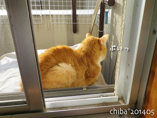 chiba14-05-147.jpg