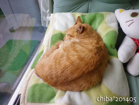 chiba14-05-159.jpg