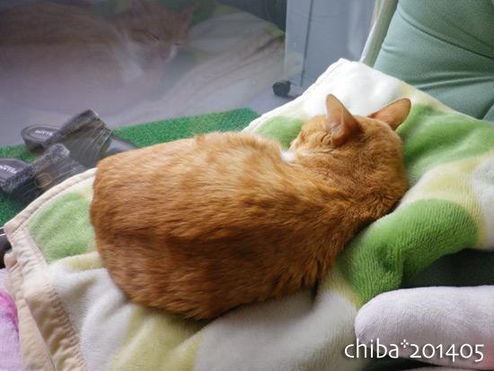 chiba14-05-160.jpg