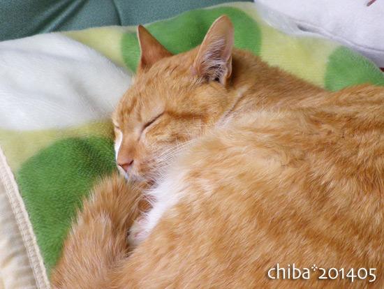 chiba14-05-161.jpg
