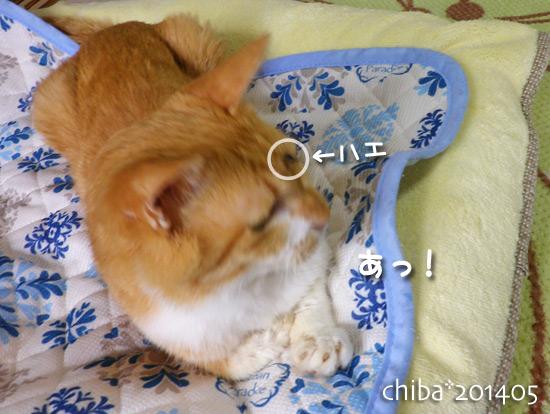 chiba14-05-168.jpg