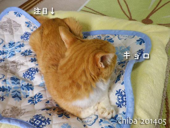 chiba14-05-171.jpg