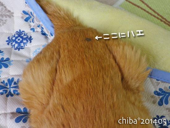 chiba14-05-173.jpg