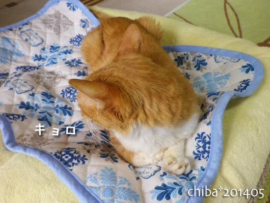 chiba14-05-174.jpg