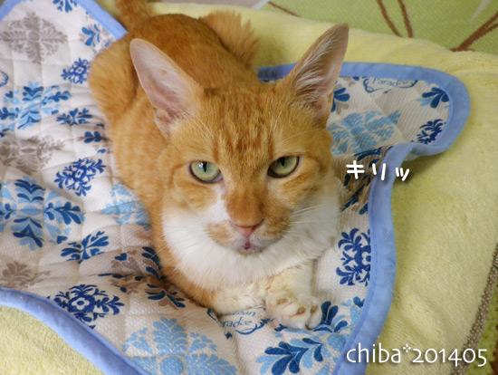 chiba14-05-176.jpg